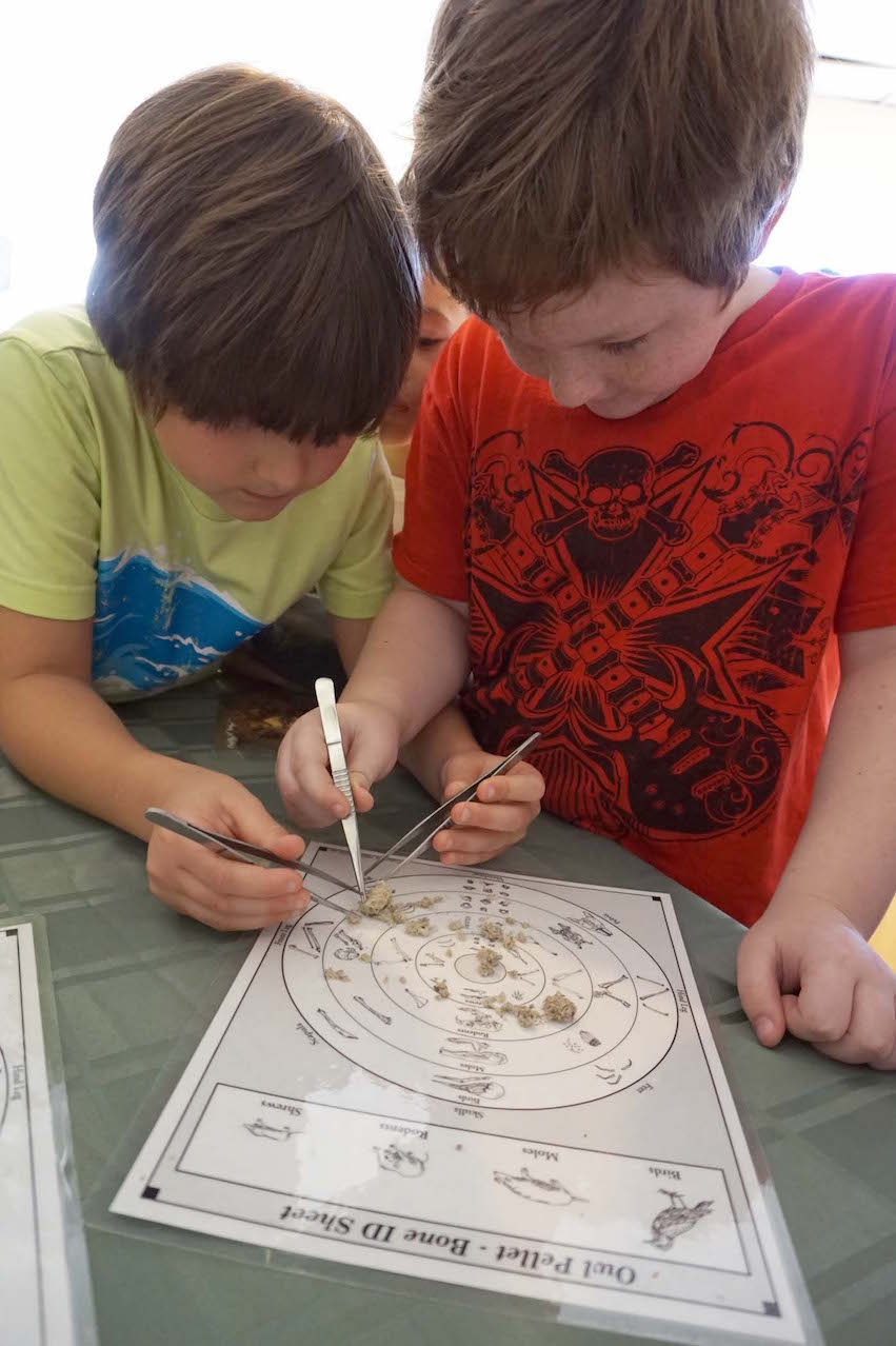 Two Lower Elementary students pick through an owl pellet to see what the owl was unable to digest from its dinner.