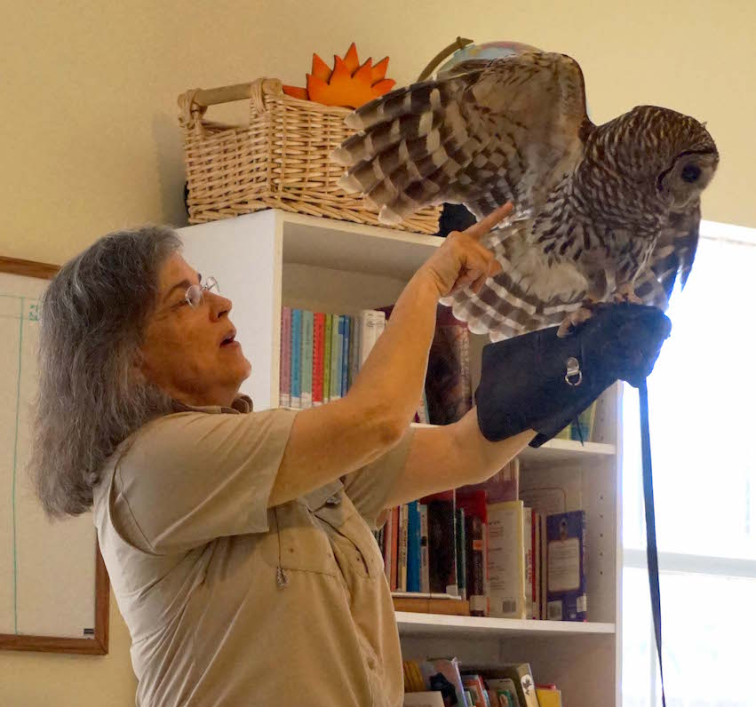Lesley Royce shows the students how long Merlin's legs really are under all of his feathers. A barred owl typically weighs only 1.5 pounds, so they really are just fluffy.