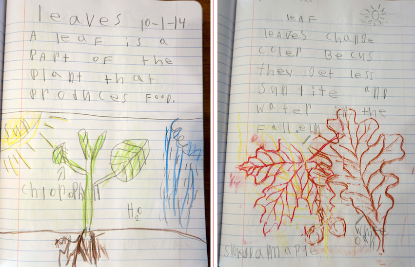Students in the Lower Elementary class keep journals that they use during nature study lessons.