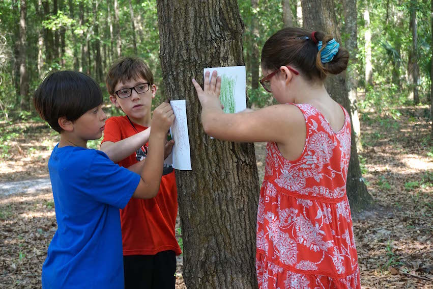 Students make bark rubbings of a tree before writing about their chosen tree.