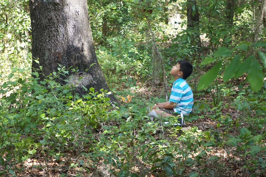 An Elementary student listens to the tree he has chosen for an activity.