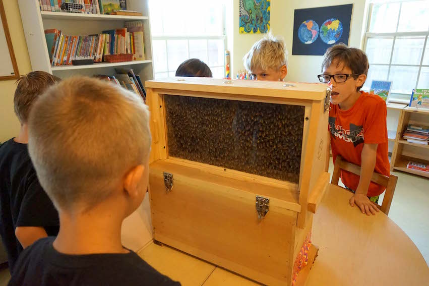 The Elementary students gather around Miss Meghan's demonstration hive, which allows one to see the bees.