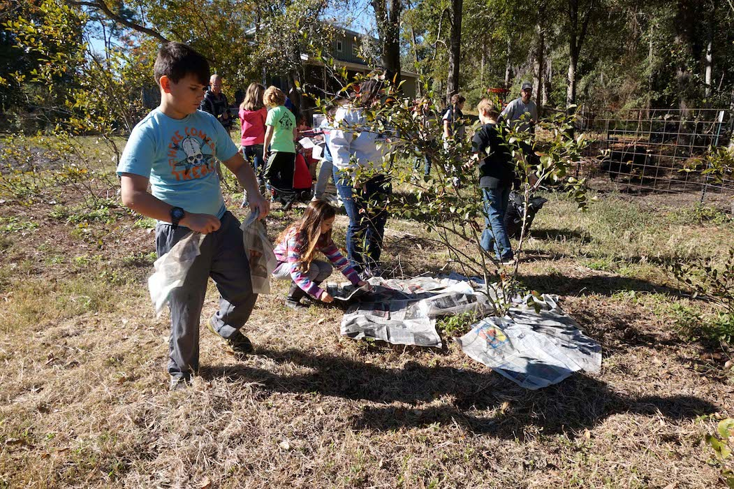 The Upper Elementary students place wet newspapers on the ground around the blueberry plants to act as a weed mat.