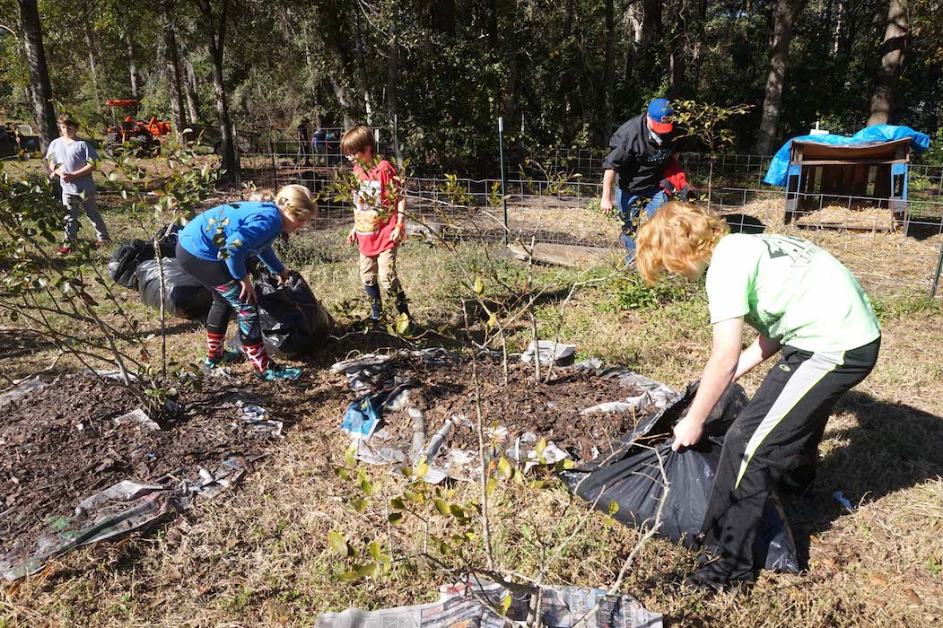 The students place leaf mulch over the newspapers around the blueberry plants.