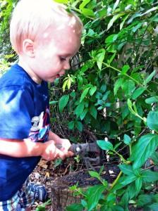 Summer Toddler Program 2012