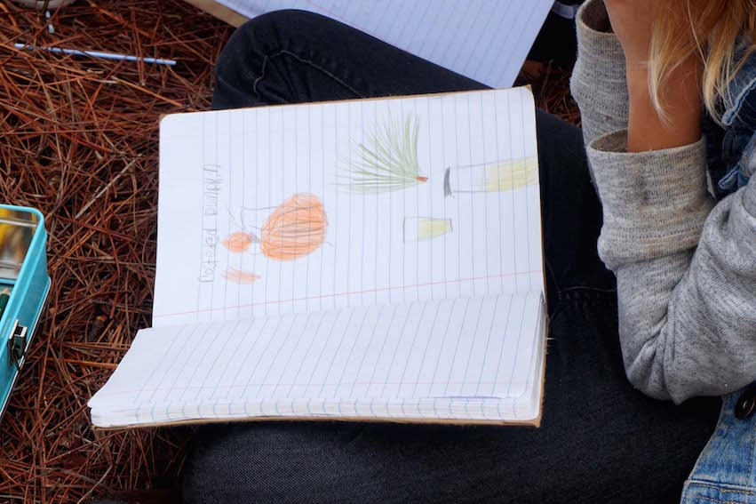 The students observed the pumpkins, pine needle branch and the tea, and then drew them in their nature journals.